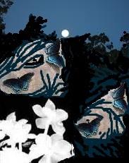 চাঁদ, প্রজাপতি ও জংলি ফুলের সম্প্রীতি-২