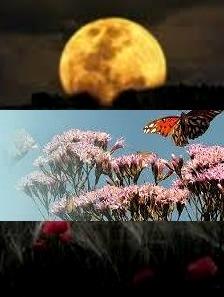 চাঁদ, প্রজাপতি ও জংলি ফুলের সম্প্রীতি-১১