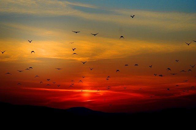 অঞ্জন আচার্যের কবিতা: ভোর ও সন্ধ্যার কথা